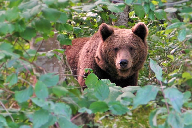 iz-oci-v-oci-z-medvedom-2006-by-bk