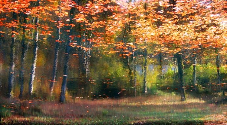 Potopljeni gozd-2007 by